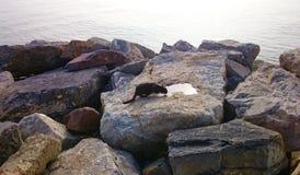 El gato es agua potable en las piedras y el fondo del mar Foto de archivo libre de regalías