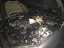 El gato es frío Fotos de archivo