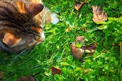 El gato está buscando Fotografía de archivo