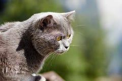 El gato está caminando en el balcón Imagenes de archivo
