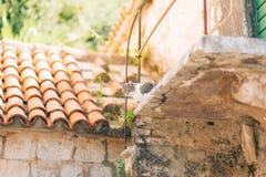 El gato está caminando en el tejado tejado de una casa en Perast, Montenegr Foto de archivo