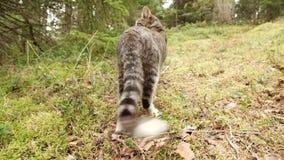 El gato está caminando en la hierba verde en el bosque metrajes