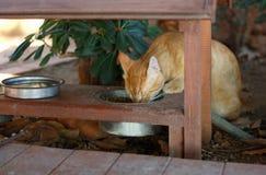 El gato está cerca del alimentador Fotografía de archivo