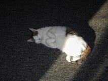 El gato está dormido imagenes de archivo