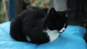 El gato está dormitando en la almohada almacen de metraje de vídeo