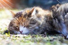 El gato está durmiendo en la hierba en la calle Foto de archivo libre de regalías