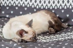 El gato está durmiendo en la silla imagenes de archivo