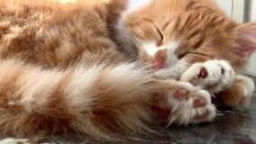 El gato está durmiendo