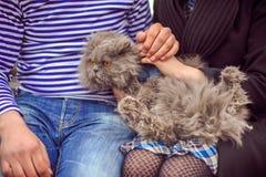 El gato está en las manos de hombres y de mujeres Foto de archivo libre de regalías