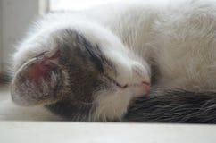 El gato está en un ventana-travesaño Imágenes de archivo libres de regalías