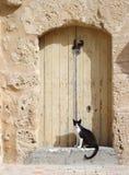 El gato está guardando la entrada a la casa Fotografía de archivo