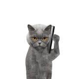 El gato está hablando sobre el teléfono móvil Fotos de archivo libres de regalías