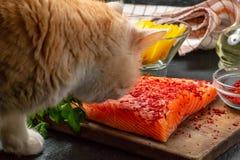 El gato está intentando robar de la tabla y comer un pedazo de prendedero de color salmón - foto, imagen imágenes de archivo libres de regalías