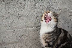 El gato está llorando imagenes de archivo