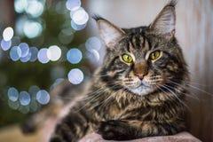 El gato está mintiendo en el sofá foto de archivo