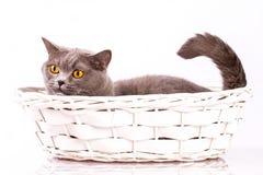 El gato está mintiendo en una cesta en un fondo blanco Imagen de archivo