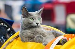 El gato está mirando Imagen de archivo libre de regalías