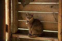 El gato está caminando en una cerca Fotografía de archivo libre de regalías