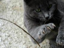 El gato está luchando Fotos de archivo libres de regalías