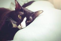 El gato femenino de la máscara que miente en la cama notting su principal cae dormido fotografía de archivo