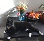El gato florece la presentación de la tabla de la aún-vida de las frutas Foto de archivo libre de regalías