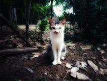 El gato fresco en la selva fotos de archivo