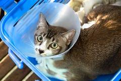 El gato fue herido y puso el cuello Imagen de archivo libre de regalías