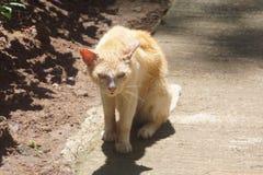 El gato gordo soñoliento imagen de archivo