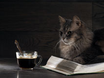 El gato grande gris miente en el libro abierto Fotografía de archivo