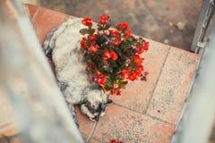 El gato graso y divertido está durmiendo en la tierra y cerca de una maceta imagen de archivo libre de regalías
