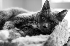 El gato gris fotos de archivo