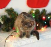 El gato gris de la felpa en un interior del ` s del Año Nuevo a la chimenea con el abeto ramifica Calcetines de la Navidad en la  Fotografía de archivo