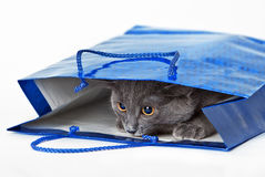 El gato gris divertido ocultó en un bolso del regalo Foto de archivo