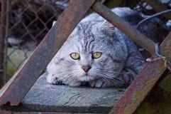 El gato gris miente en una escalera oxidada en la calle fotografía de archivo libre de regalías