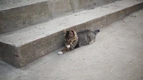 El gato gris se relaja en la granja almacen de video