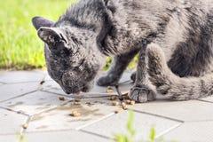 El gato gris sin hogar come Imagen de archivo