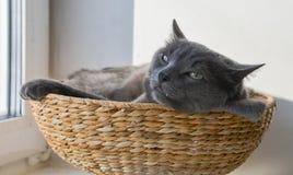 El gato gris tiene una siesta en la cesta de mimbre Imágenes de archivo libres de regalías