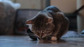 El gato guarda el ratón almacen de metraje de vídeo