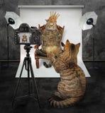 El gato hace una foto del rey fotos de archivo libres de regalías