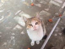 El gato hambriento Imagen de archivo