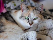 El gato hermoso se está sentando en una cama de bebé foto de archivo
