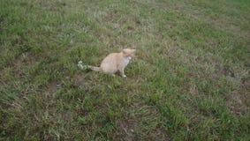 El gato i la tiene encontrado Imágenes de archivo libres de regalías
