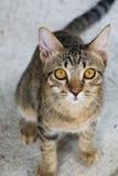 El gato joven mira para arriba una cámara Fotografía de archivo libre de regalías