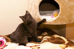 El gato juega cerca de su casa Imagenes de archivo