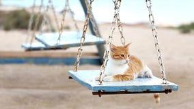 El gato juguetón curioso monta en el oscilación de madera retro almacen de metraje de vídeo