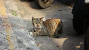 El gato lindo Fotos de archivo libres de regalías