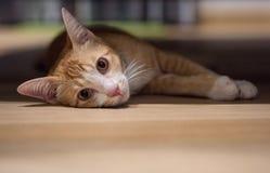 El gato lindo anaranjado Imagen de archivo
