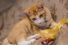 El gato lindo anaranjado Imagen de archivo libre de regalías