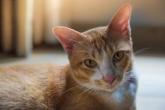El gato lindo anaranjado Imagenes de archivo