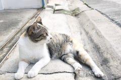 el gato lindo coloca en la calle que mira algo Foto de archivo
